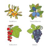 Set of vector doodle pied berries isolated on white Royalty Free Stock Photography