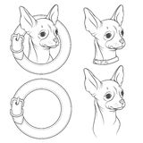 A set of vector drawing of the chihuahua in the collar. EPS10 Stock Photo