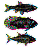 Set of vector drawn fishes, different underwater species. Organi Royalty Free Stock Photography