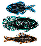 Set of vector drawn fishes, different underwater species. Organi Stock Images