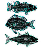 Set of vector drawn fishes, different underwater species. Organi Stock Photo