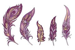 Set of  vector  feathers. Set of vector bird feathers decorated with patterns in violet color Royalty Free Stock Image