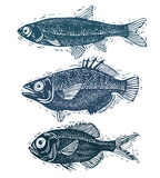 Set of vector fishes, different underwater species. Organic seaf Royalty Free Stock Images