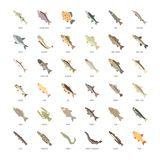 Set Vector Flat Icons of Freshwater Fish. Set vector illustration of freshwater fish. Flat elements on white background Stock Images