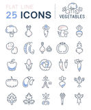 Set Vector Flat Line Icons Vegetables Royalty Free Stock Photography