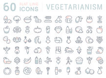 Free Set Vector Flat Line Icons Vegetarianism Stock Images - 80048924