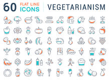 Set Vector Flat Line Icons Vegetarianism Royalty Free Stock Image