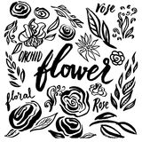 Set of vector floral design elements Royalty Free Stock Photo