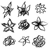 Set of vector floral design elements Royalty Free Stock Photos