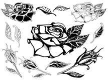 Set of vector floral design elements Stock Image