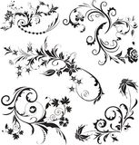 Set of vector floral design on white. Vector illustration. Set of vector floral design on white. Vector illustration EPS 10 Royalty Free Illustration