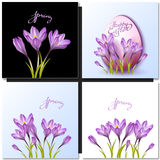 Set of vector flowers and spring lettering Royalty Free Stock Photography