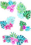 Set of vector flowers. in tropical bouquets. Tropica vector beautiful drawn bouquets. set of 5 floral compositions Stock Photography