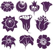 Set of Vector Flowers. On white Stock Photos