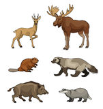 Set of vector forest animals Stock Photography