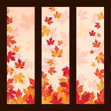 Set of vector frames with autumn maple leaves Stock Images