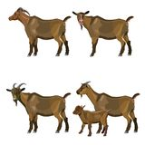Set of vector goats royalty free illustration