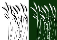 Set of vector grass silhouettes Stock Image