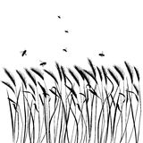 Set of vector grass silhouettes Royalty Free Stock Images