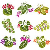 Set of vector green spring leaves with tendrils and different be. Rries and seeds. Ecology theme design elements, gardening symbol. Natural icons set Royalty Free Stock Photos
