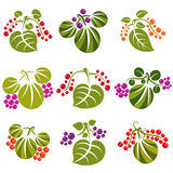 Set of vector green spring leaves with tendrils and different be. Rries and seeds. Ecology theme design elements, gardening symbol. Natural icons set Royalty Free Stock Photography