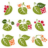 Set of vector green spring leaves with tendrils and different sw Royalty Free Stock Photography