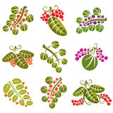 Set of vector green spring leaves with tendrils and different sw Royalty Free Stock Image