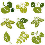 Set of vector green spring leaves with tendrils. Ecology theme d Royalty Free Stock Image