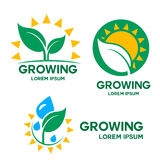 Set of vector growing emblem, logo on white background.  Stock Images