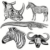Set of vector hand drawn African animals Stock Illustration