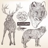Set of vector hand drawn detailed animals for design Stock Images