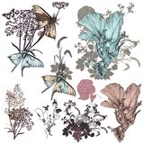 Set of vector hand drawn flowers Stock Image
