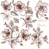 Set of vector hand drawn hibiscus flowers Royalty Free Stock Photo
