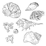 Set of vector hand drawn seashells. Isolated in white Stock Photos