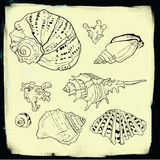 Set of vector hand drawn seashells. Isolated in white royalty free illustration