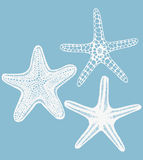 Set of vector hand-drawn starfishes Stock Photos