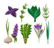 Set of 9 vector herbs Royalty Free Stock Photo