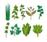 Set of 9 vector herbs Stock Photos
