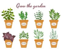 Set of vector herbs in pots with labels Royalty Free Stock Photos