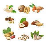 Set vector icons of nuts Royalty Free Stock Photos