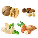 Set vector icons of nuts. Set of vector icons of nuts - cashews, walnuts, almonds, pine nuts on white stock illustration