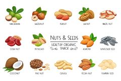 Set vector icons nuts and seeds. vector illustration