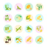 Set Vector Flat Icons of Beans and Cereals royalty free illustration