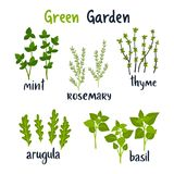 Set of vector illustration herbs with lettering. vector illustration