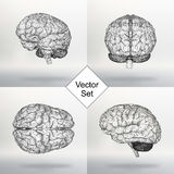 Set Vector illustration human brain. The structural grid of polygons. Abstract Creative concept vector background. Molecular lattice. Polygonal design style Stock Photography