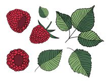Set of  illustrations of raspberries and leaves, isolated on white background vector illustration