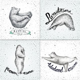 Set of Vector illustrations. fun a bears isolated on vintage Stock Photography