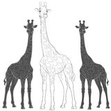 Set of vector illustrations with giraffes. Isolated objects. EPS10 Royalty Free Stock Photography