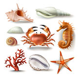 Set of vector illustrations seashells, coral, crab and starfish. Set of vector illustrations, badges, stickers, seashells of various kinds and coral, crab Stock Image