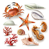 Set of vector illustrations seashells, coral, crab and starfish Stock Image